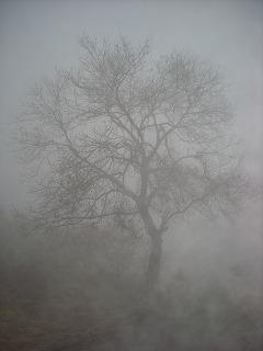 霧の中の大樹