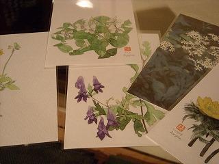 矢島君の野の花の絵葉書