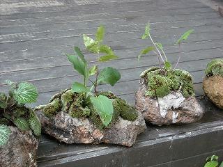 軽石寄せ植え