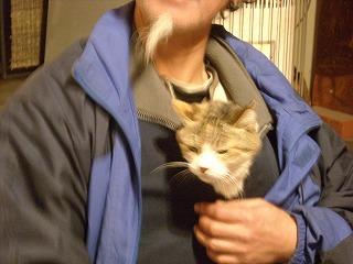 猫とおやじ