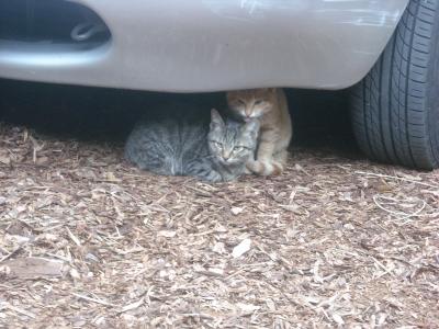 車の下がお好き