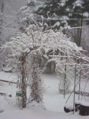 雪の中の薔薇