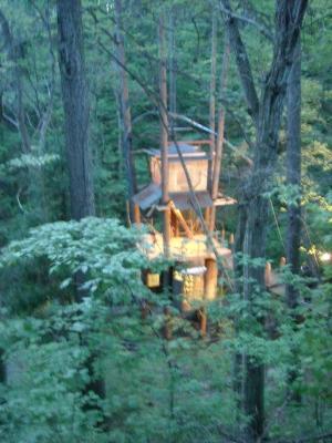 夜のツリーハウス