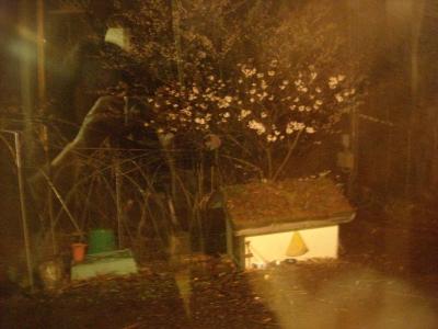 コエダの家の花見